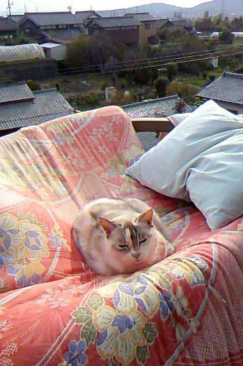 sundayshiro2